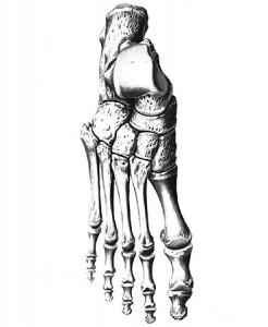 Сесамовидные кости.