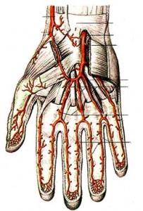 Средняя часть бугристости на руке.